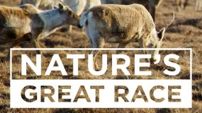 Follow Breathtaking Wildlife Adventures in <em>Nature's Great Race</em>